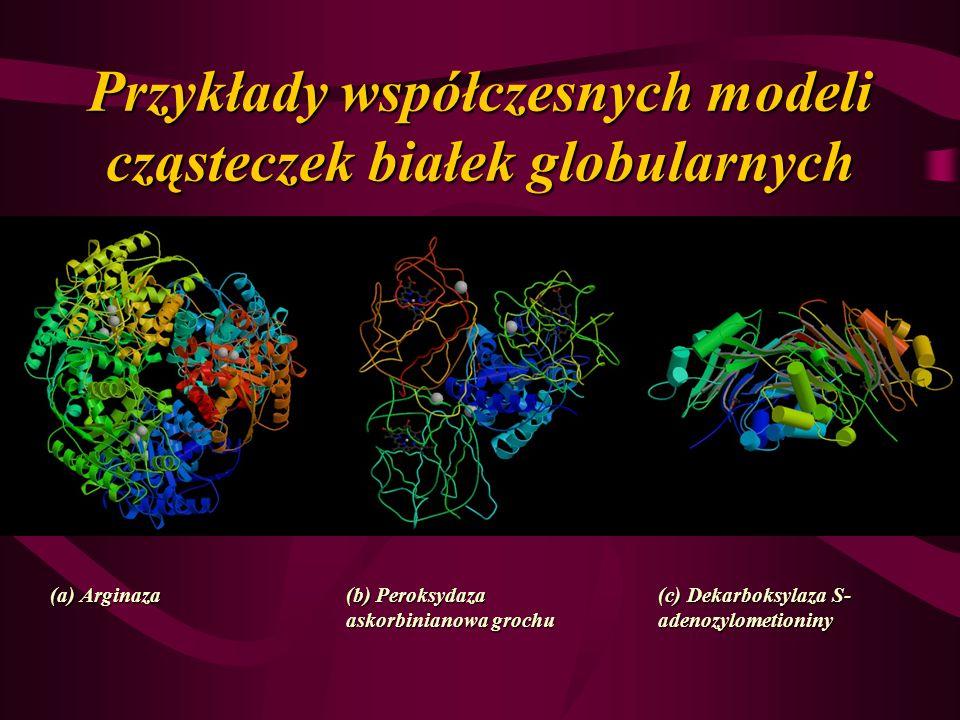 Przykłady współczesnych modeli cząsteczek białek globularnych (a) Arginaza (b) Peroksydaza askorbinianowa grochu (c) Dekarboksylaza S- adenozylometion