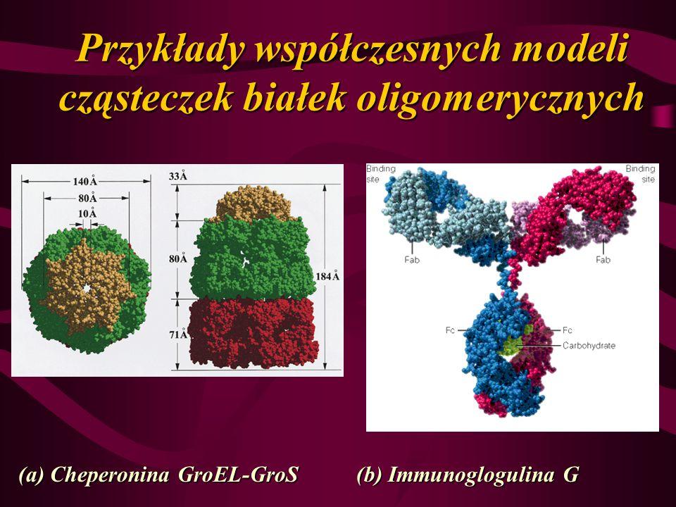 Przykłady współczesnych modeli cząsteczek białek oligomerycznych (a) Cheperonina GroEL-GroS(b) Immunoglogulina G
