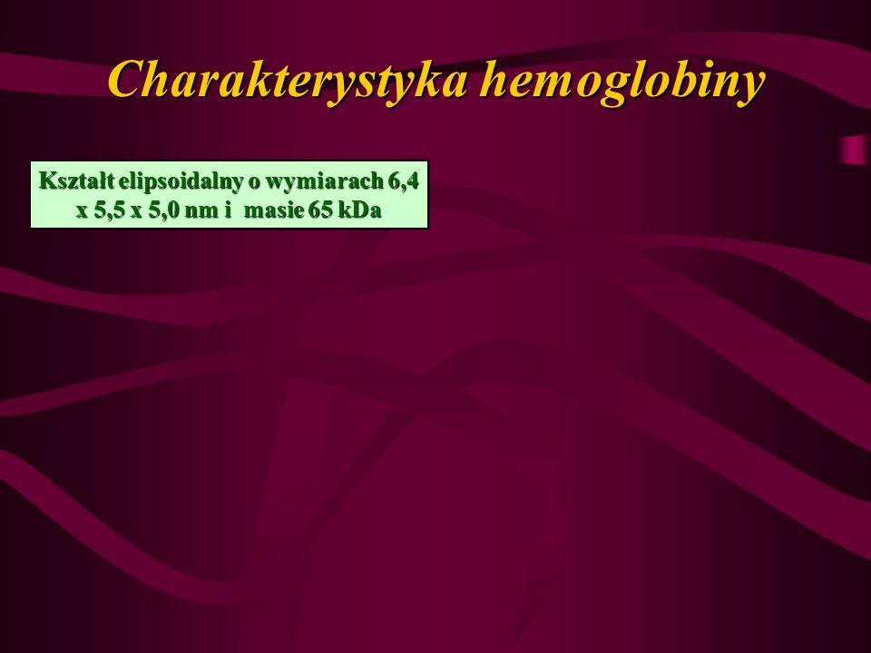 Charakterystyka hemoglobiny Kształt elipsoidalny o wymiarach 6,4 x 5,5 x 5,0 nm i masie 65 kDa