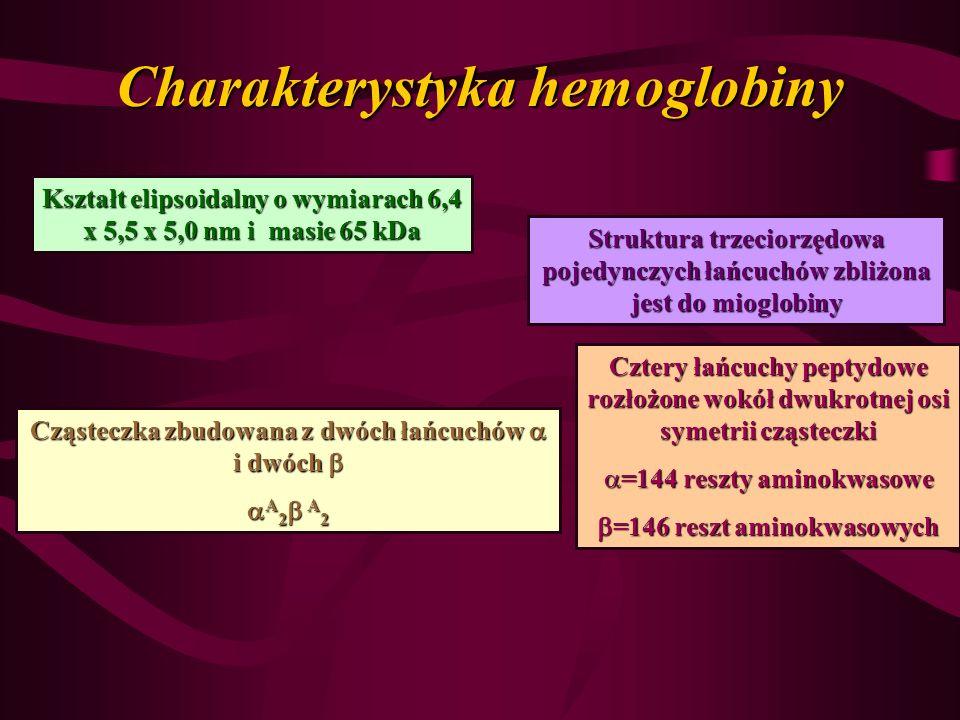 Charakterystyka hemoglobiny Kształt elipsoidalny o wymiarach 6,4 x 5,5 x 5,0 nm i masie 65 kDa Cząsteczka zbudowana z dwóch łańcuchów i dwóch Cząstecz