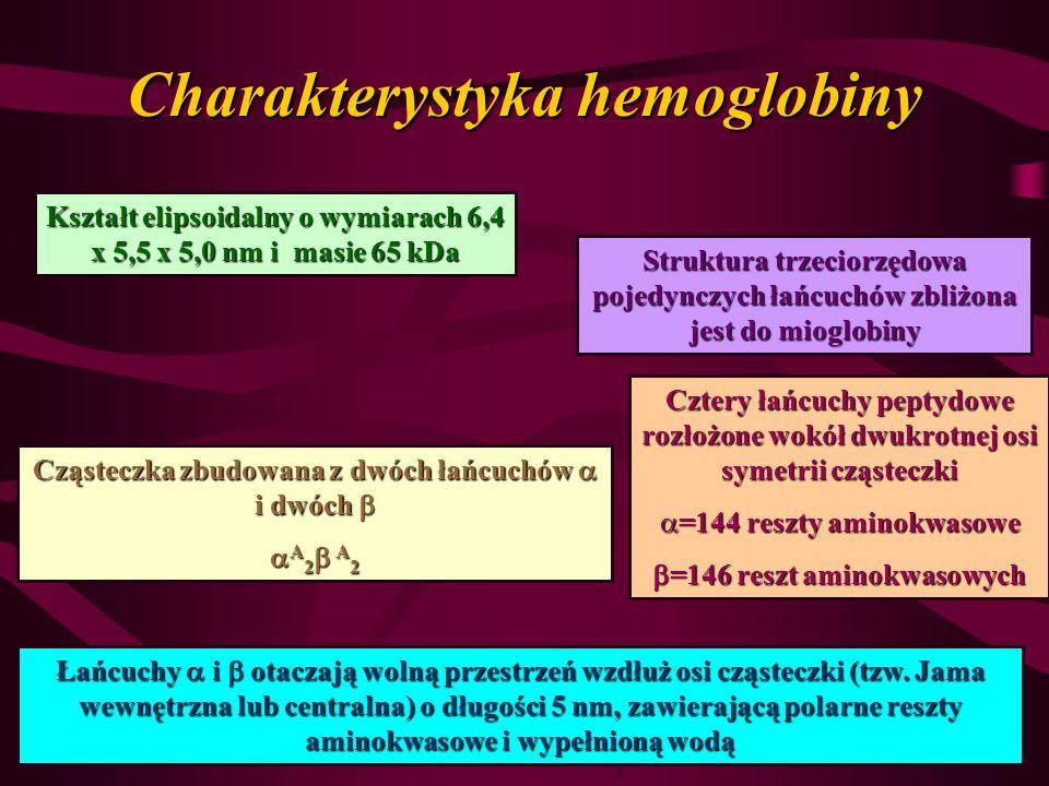 Charakterystyka hemoglobiny Kształt elipsoidalny o wymiarach 6,4 x 5,5 x 5,0 nm i masie 65 kDa Struktura trzeciorzędowa pojedynczych łańcuchów zbliżon
