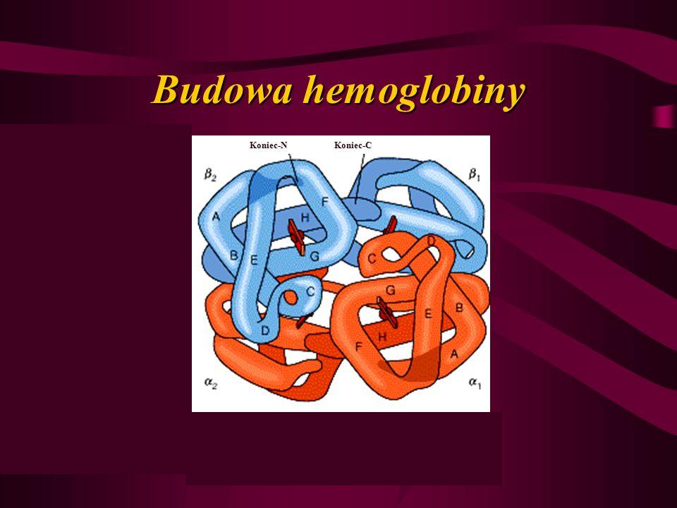 Budowa hemoglobiny Koniec-NKoniec-C