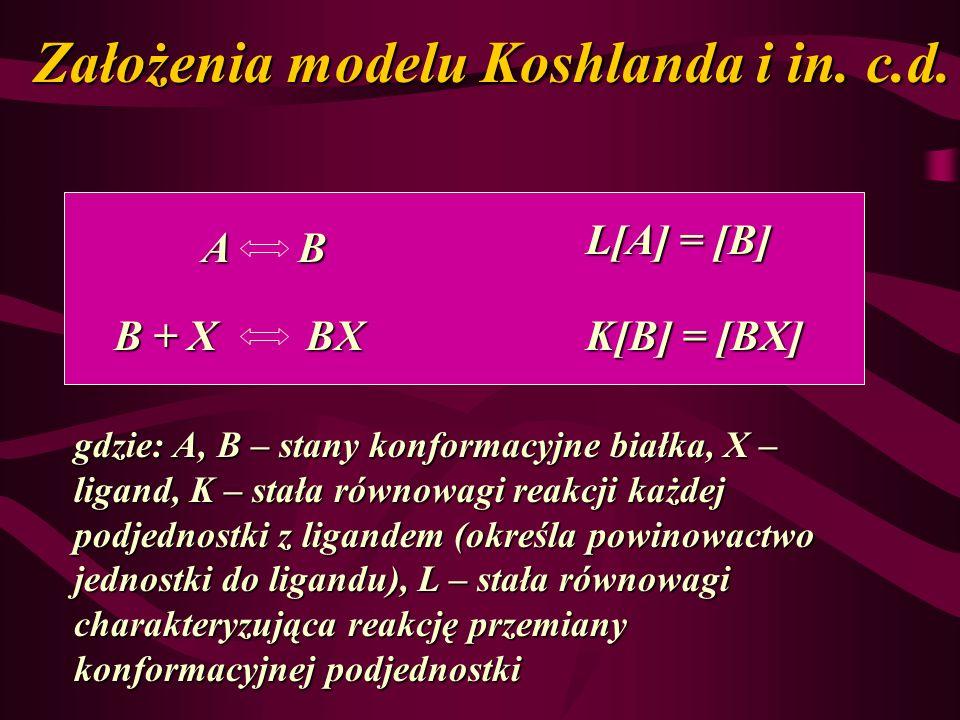 Założenia modelu Koshlanda i in. c.d. ABABABAB B + X BX L[A] = [B] K[B] = [BX] gdzie: A, B – stany konformacyjne białka, X – ligand, K – stała równowa
