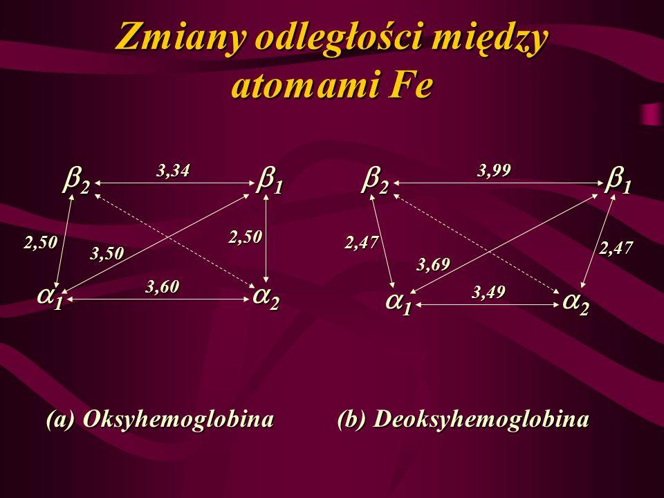 Zmiany odległości między atomami Fe 2 1 2 1 1 2 1 2 3,34 3,60 3,50 2,50 2,50 3,99 2,47 3,49 2,47 3,69 (a) Oksyhemoglobina (b) Deoksyhemoglobina
