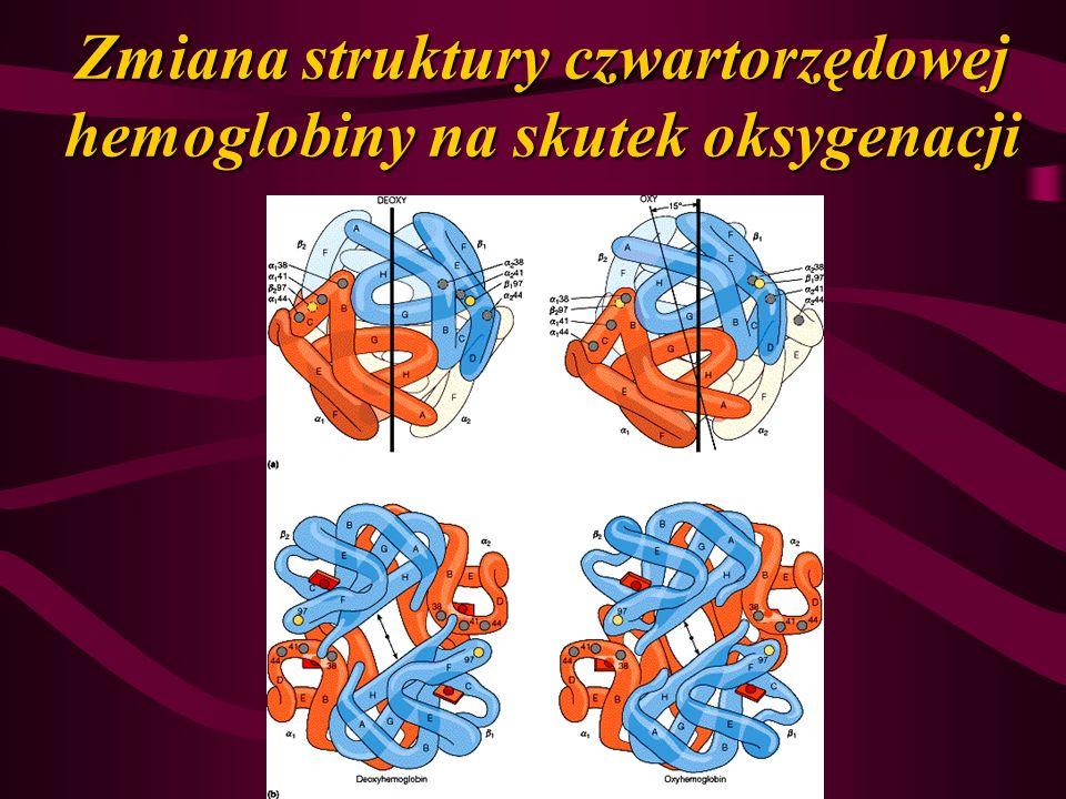 Zmiana struktury czwartorzędowej hemoglobiny na skutek oksygenacji