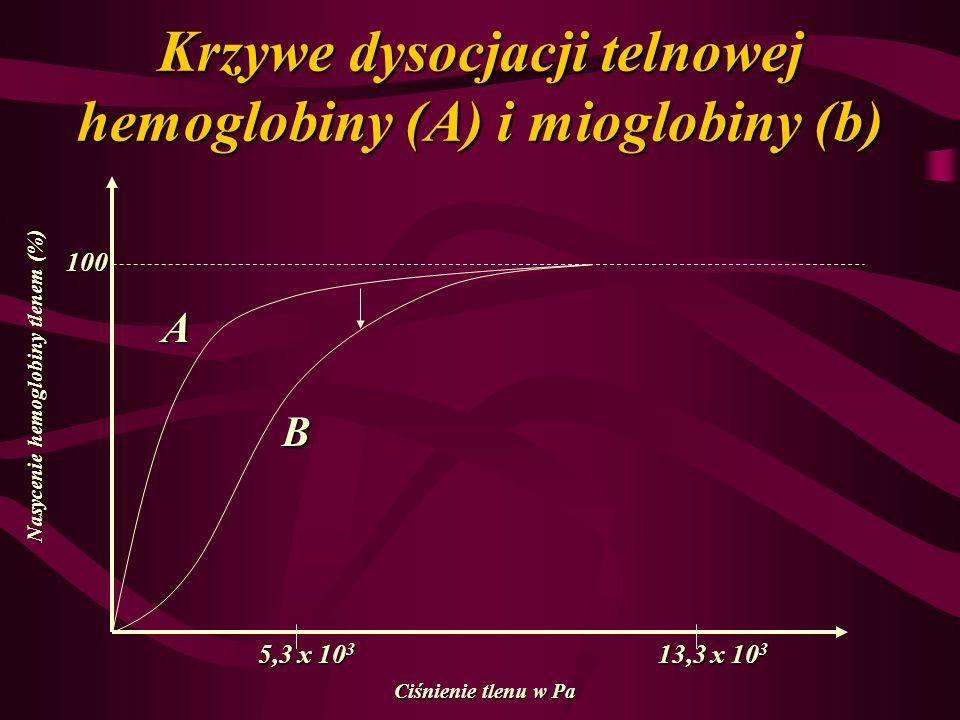 Krzywe dysocjacji telnowej hemoglobiny (A) i mioglobiny (b) 100 5,3 x 10 3 13,3 x 10 3 A B Nasycenie hemoglobiny tlenem (%) Ciśnienie tlenu w Pa