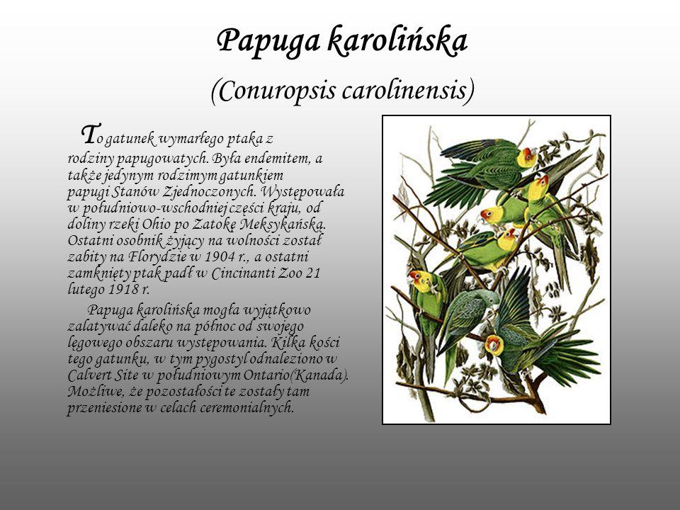 Papuga karolińska (Conuropsis carolinensis) T o gatunek wymarłego ptaka z rodziny papugowatych. Była endemitem, a także jedynym rodzimym gatunkiem pap
