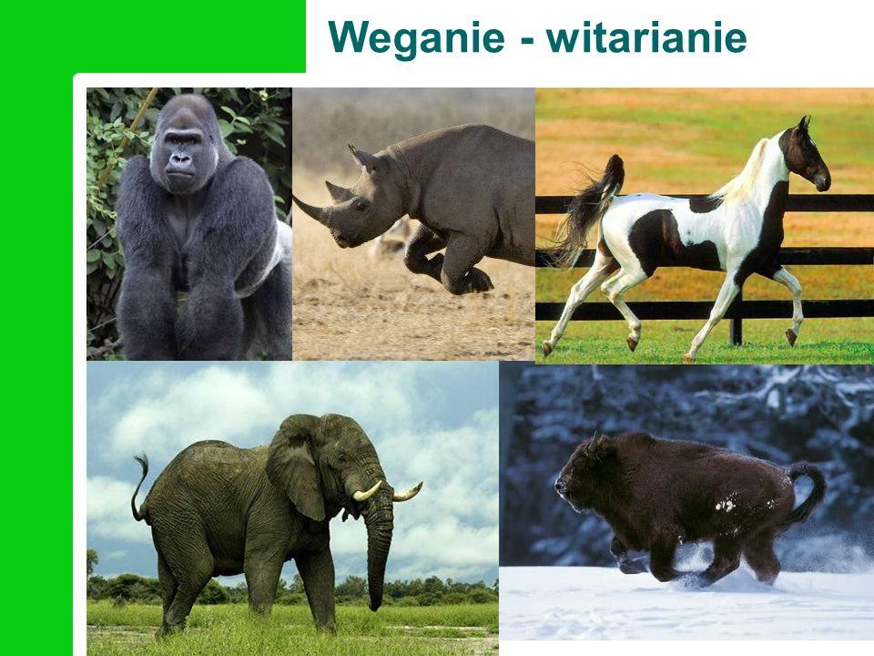 Wegańscy sportowcy
