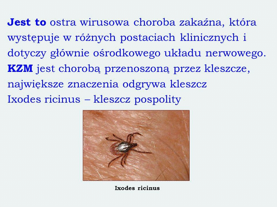 Jest to ostra wirusowa choroba zakaźna, która występuje w różnych postaciach klinicznych i dotyczy głównie ośrodkowego układu nerwowego. KZM jest chor
