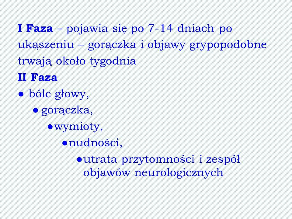I Faza – pojawia się po 7-14 dniach po ukąszeniu – gorączka i objawy grypopodobne trwają około tygodnia II Faza bóle głowy, gorączka, wymioty, nudnośc