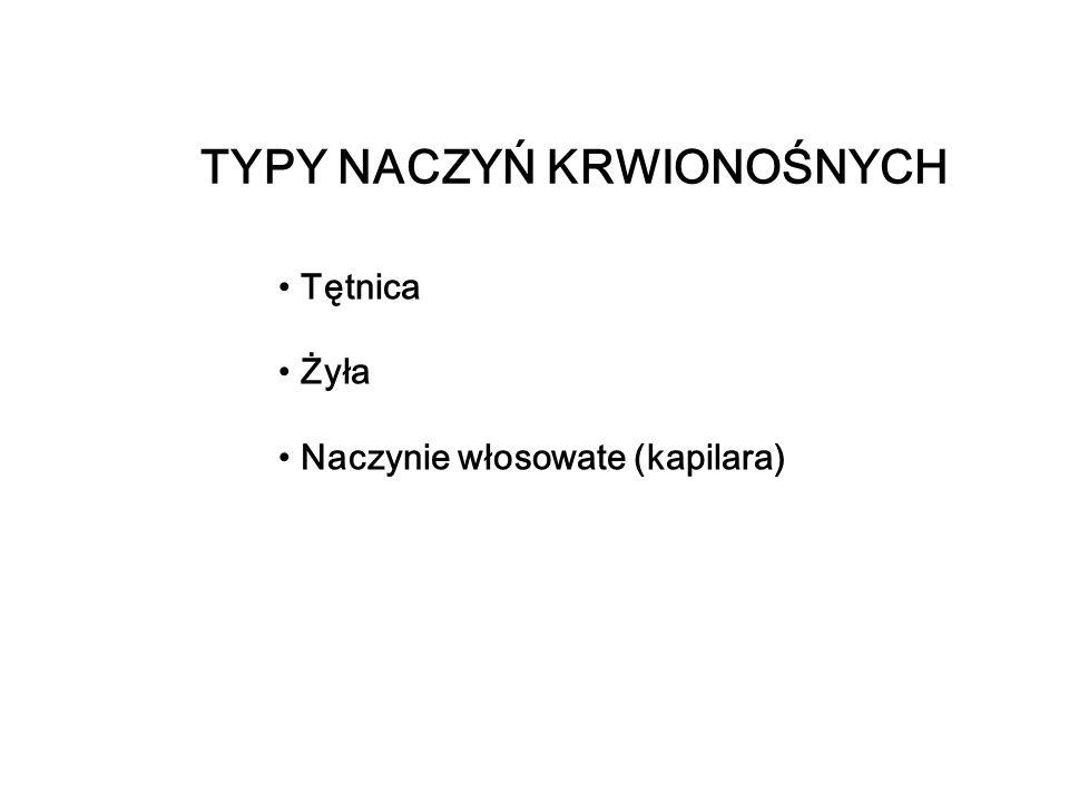 TYPY NACZYŃ KRWIONOŚNYCH Tętnica Żyła Naczynie włosowate (kapilara)
