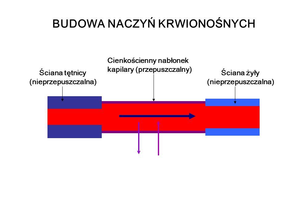 Ściana tętnicy (nieprzepuszczalna) Ściana żyły (nieprzepuszczalna) Cienkościenny nabłonek kapilary (przepuszczalny) BUDOWA NACZYŃ KRWIONOŚNYCH