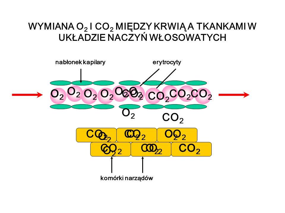 WYMIANA O 2 I CO 2 MIĘDZY KRWIĄ A TKANKAMI W UKŁADZIE NACZYŃ WŁOSOWATYCH nabłonek kapilaryerytrocyty komórki narządów O2O2 O2O2 O2O2 O2O2 O2O2 O2O2 CO