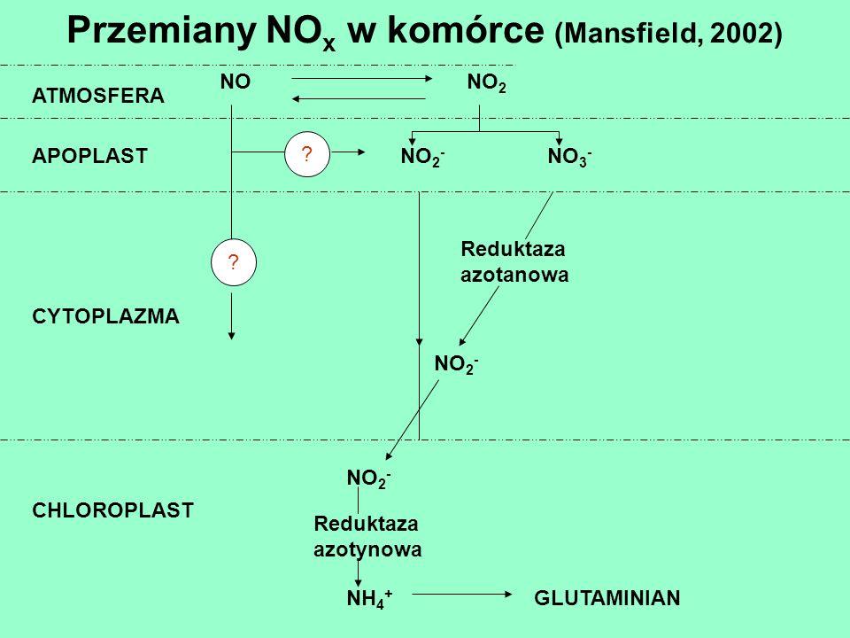 ATMOSFERA APOPLAST CYTOPLAZMA CHLOROPLAST Reduktaza azotanowa Reduktaza azotynowa GLUTAMINIAN NONO 2 NO 2 - NO 3 - NO 2 - NH 4 + ? ?. Przemiany NO x w