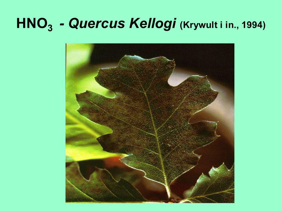 HNO 3 - Quercus Kellogi (Krywult i in., 1994)