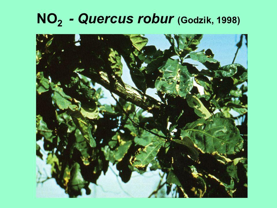 NO 2 - Quercus robur (Godzik, 1998)