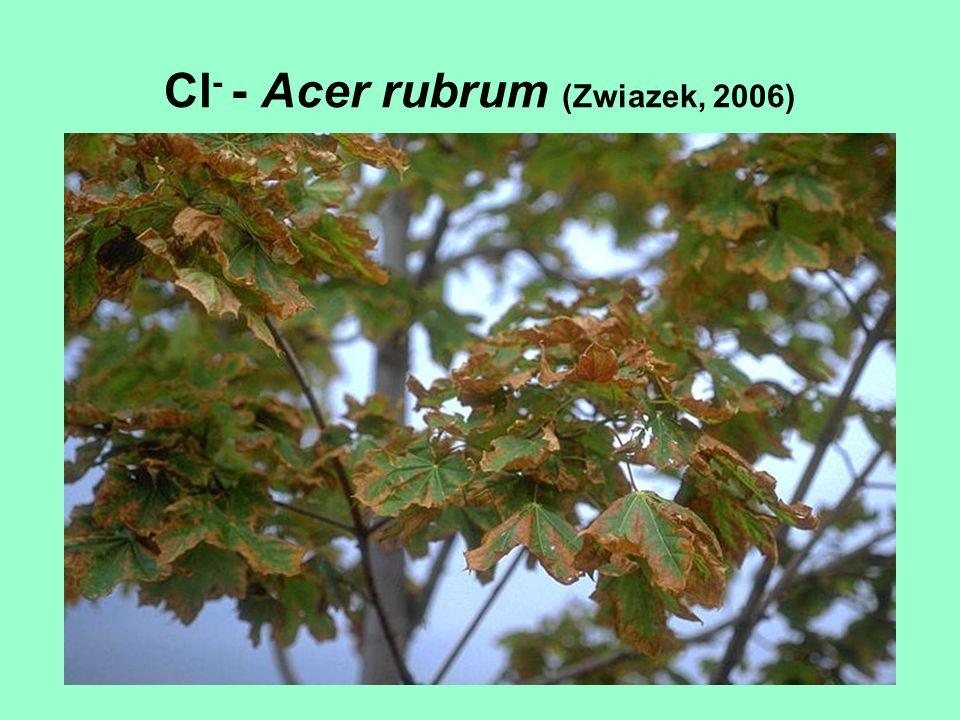 Cl - - Acer rubrum (Zwiazek, 2006)