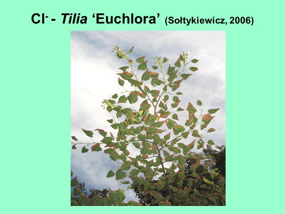 Cl - - Tilia Euchlora (Sołtykiewicz, 2006)