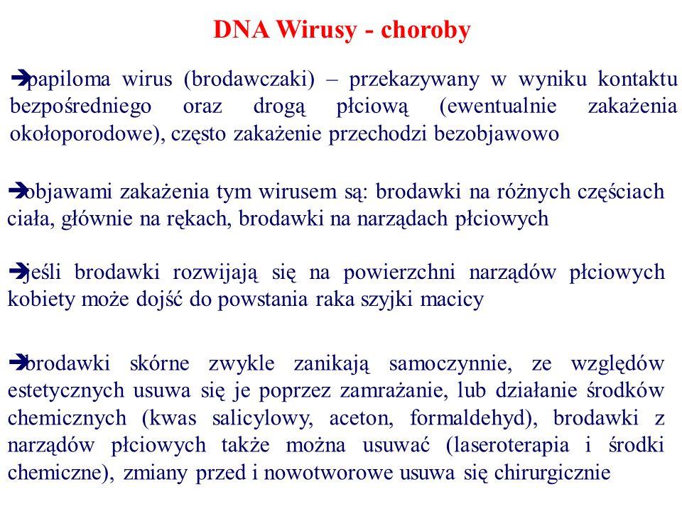 DNA Wirusy - choroby papiloma wirus (brodawczaki) – przekazywany w wyniku kontaktu bezpośredniego oraz drogą płciową (ewentualnie zakażenia okołoporod