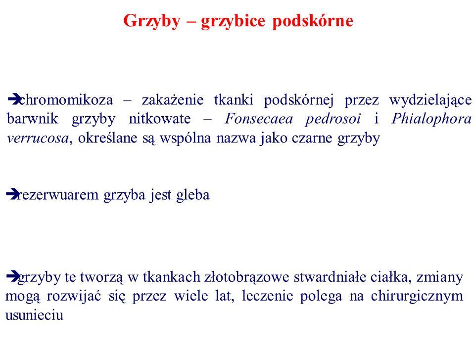Grzyby – grzybice podskórne chromomikoza – zakażenie tkanki podskórnej przez wydzielające barwnik grzyby nitkowate – Fonsecaea pedrosoi i Phialophora