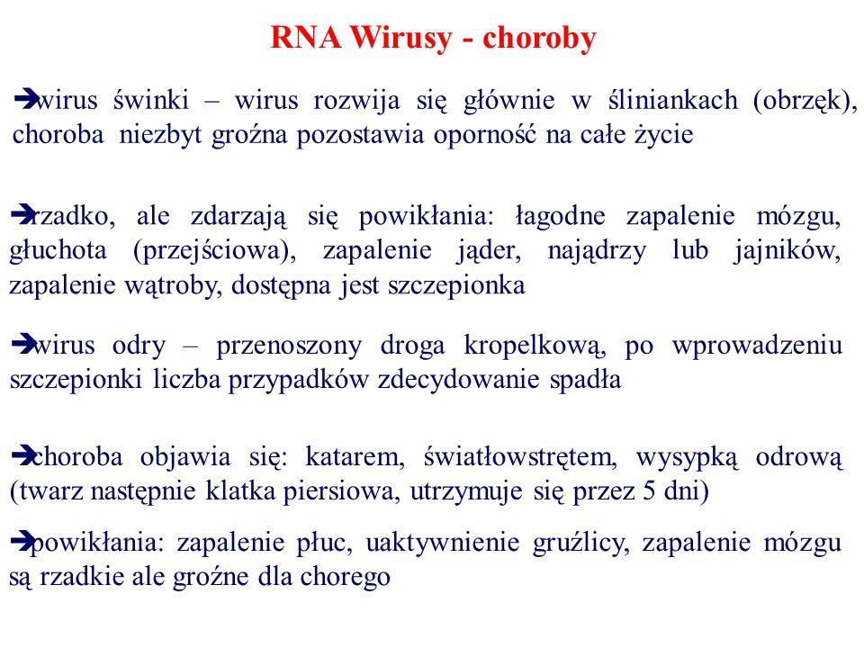 RNA Wirusy - choroby wirus świnki – wirus rozwija się głównie w śliniankach (obrzęk), choroba niezbyt groźna pozostawia oporność na całe życie rzadko,