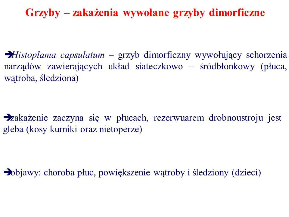 Grzyby – zakażenia wywołane grzyby dimorficzne Histoplama capsulatum – grzyb dimorficzny wywołujący schorzenia narządów zawierających układ siateczkow