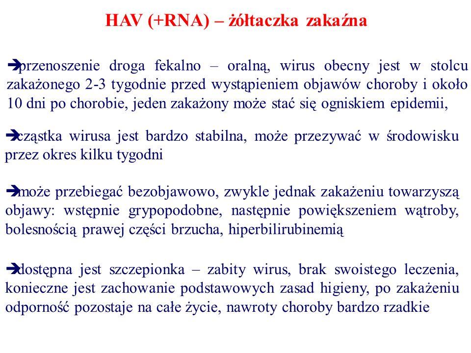 HBV (DNA - niekompletny) zapalenie wątroby typu B uważane jest za groźniejszą chorobę niż w przypadku typu A wirus HBV znajduje się we krwi i produktach krwiopochodnych (łzy, ślina, sperma, mocz, kał, płyn rdzeniowo – mózgowy, mleko), w Polsce zachorowalność wynosi około 23 osoby na 100 000 choroba może przebiegać zupełnie bezobjawowo jak i z objawami: wystąpienie żółtaczki, nad aktywności enzymów wątrobowych, złe samopoczucie zdarzają się też poważne powikłania: bóle stawów, guzkowe zapalenie tętnic, zapalenie nerek – objawy uogólnionego stanu zapalnego naczyń krwionośnych największym problemem jest przewlekłe zapalenie wątroby (długotrwałe), może ono odprowadzić do marskości czy raka wątroby dostępna jest szczepionka – rekombinantowa