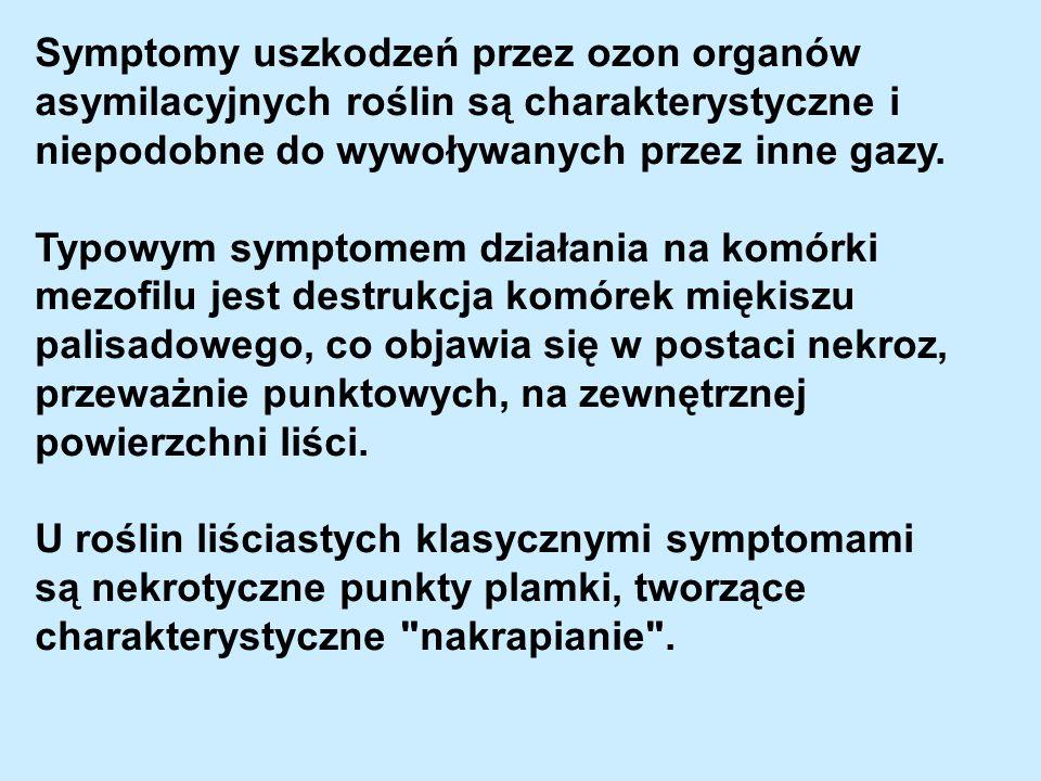 Symptomy uszkodzeń przez ozon organów asymilacyjnych roślin są charakterystyczne i niepodobne do wywoływanych przez inne gazy. Typowym symptomem dział