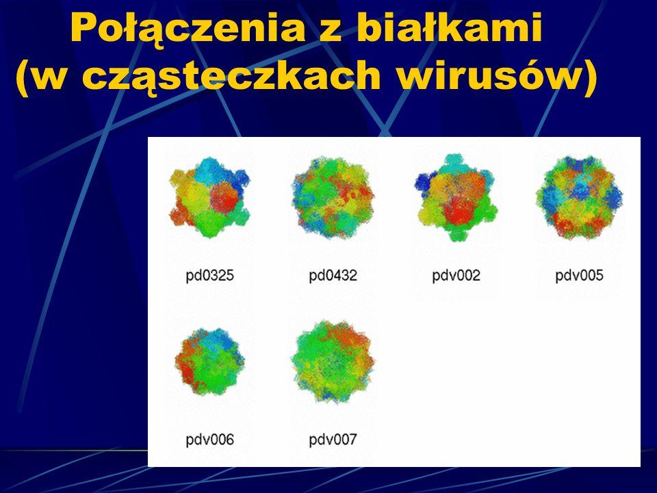 Połączenia z białkami (w cząsteczkach wirusów)