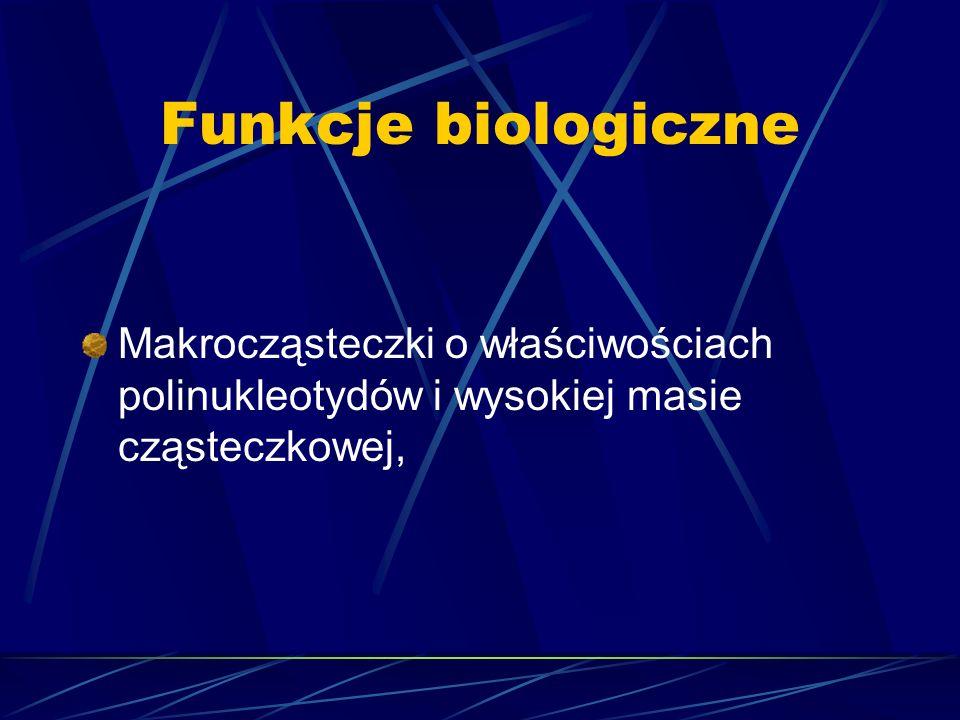 Funkcje biologiczne Makrocząsteczki o właściwościach polinukleotydów i wysokiej masie cząsteczkowej,