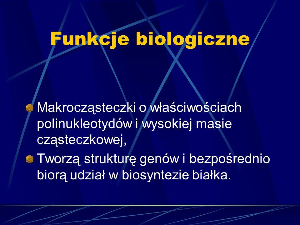 Funkcje biologiczne Makrocząsteczki o właściwościach polinukleotydów i wysokiej masie cząsteczkowej, Tworzą strukturę genów i bezpośrednio biorą udzia