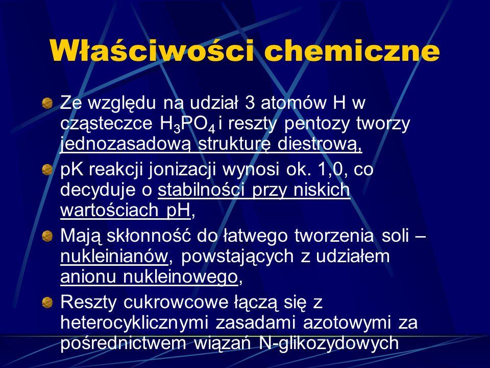 Właściwości chemiczne Ze względu na udział 3 atomów H w cząsteczce H 3 PO 4 i reszty pentozy tworzy jednozasadową strukturę diestrową, pK reakcji joni