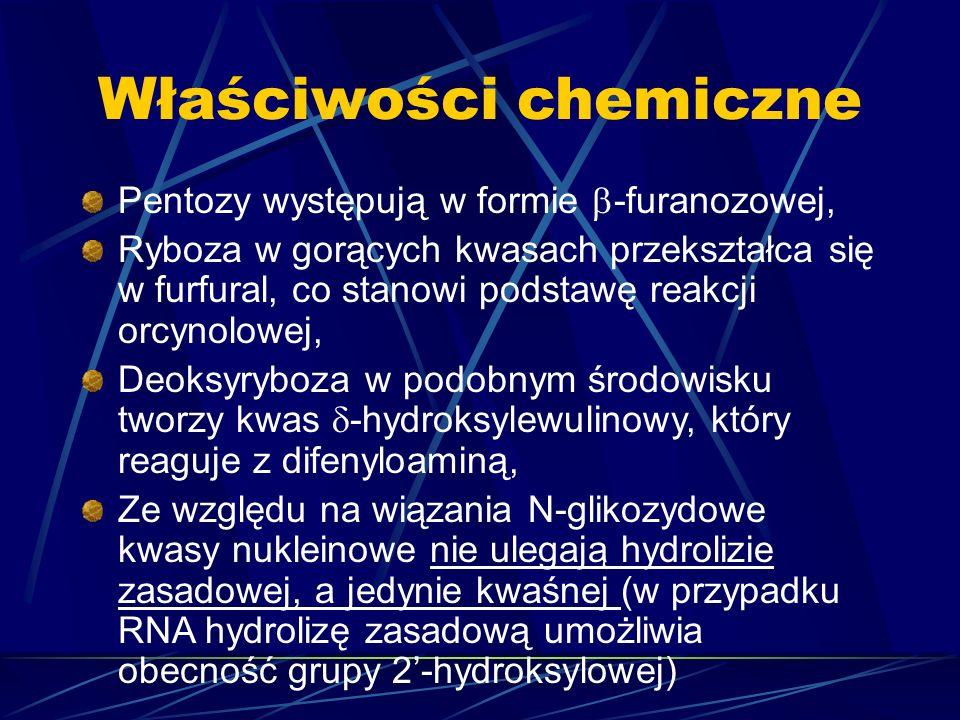 Właściwości chemiczne Pentozy występują w formie -furanozowej, Ryboza w gorących kwasach przekształca się w furfural, co stanowi podstawę reakcji orcy