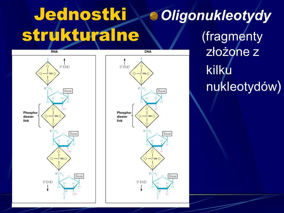 Jednostki strukturalne Oligonukleotydy (fragmenty złożone z kilku nukleotydów )