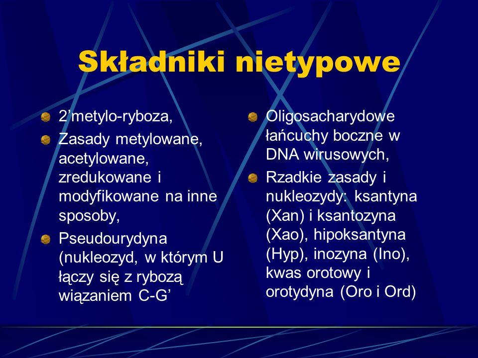 Składniki nietypowe 2metylo-ryboza, Zasady metylowane, acetylowane, zredukowane i modyfikowane na inne sposoby, Pseudourydyna (nukleozyd, w którym U ł