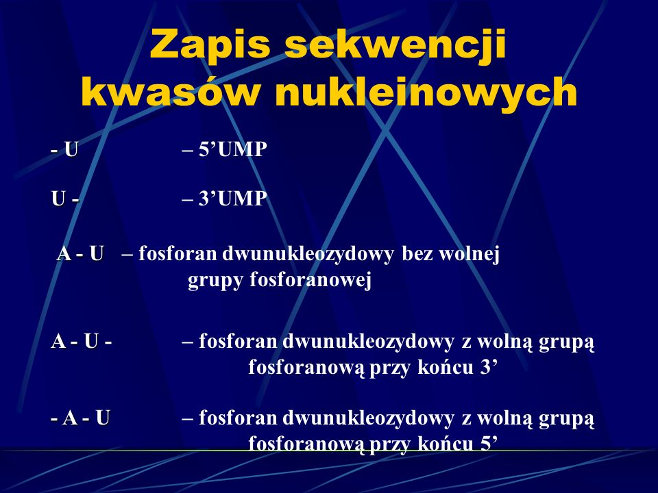 Zapis sekwencji kwasów nukleinowych - U - U – 5UMP U - U - – 3UMP A - U A - U – fosforan dwunukleozydowy bez wolnej grupy fosforanowej A - U A - U -–