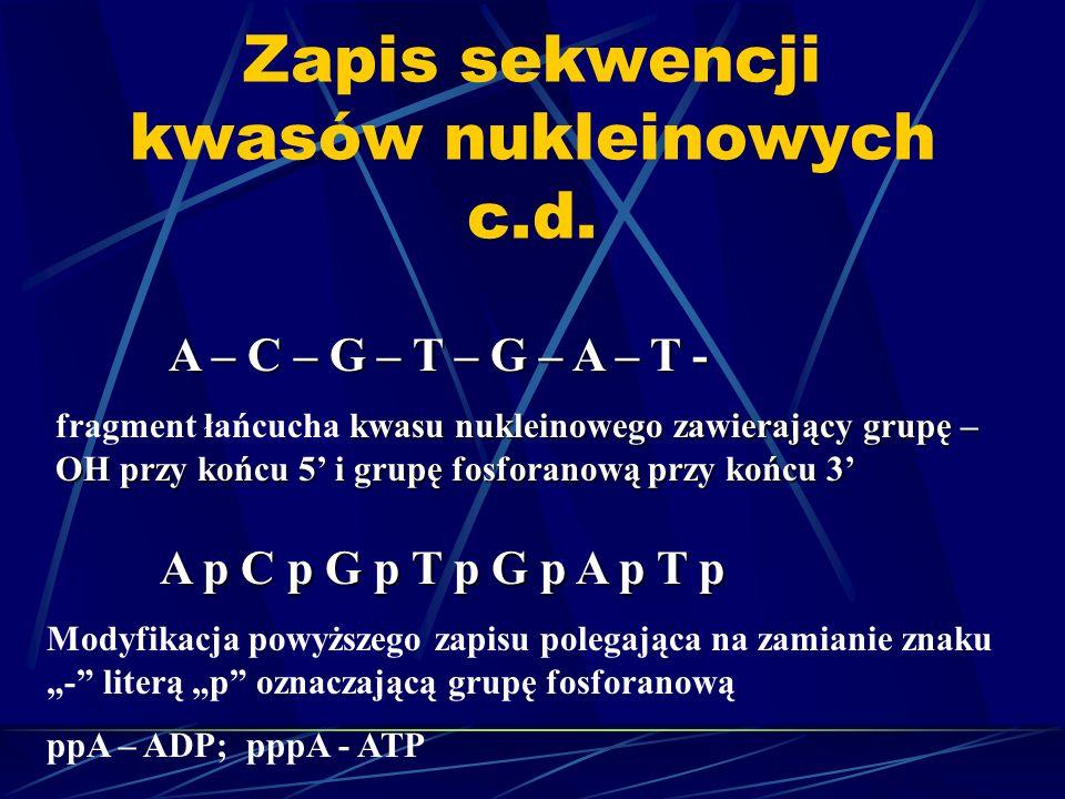 Zapis sekwencji kwasów nukleinowych c.d. A – C – G – T – G – A – T - kwasu nukleinowego zawierający grupę – OH przy końcu 5 i grupę fosforanową przy k