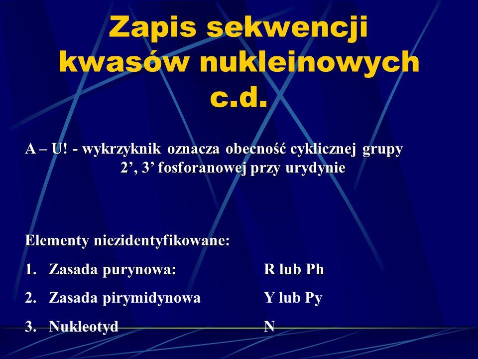 Zapis sekwencji kwasów nukleinowych c.d. A – U! - wykrzyknik oznacza obecność cyklicznej grupy 2, 3 fosforanowej przy urydynie Elementy niezidentyfiko