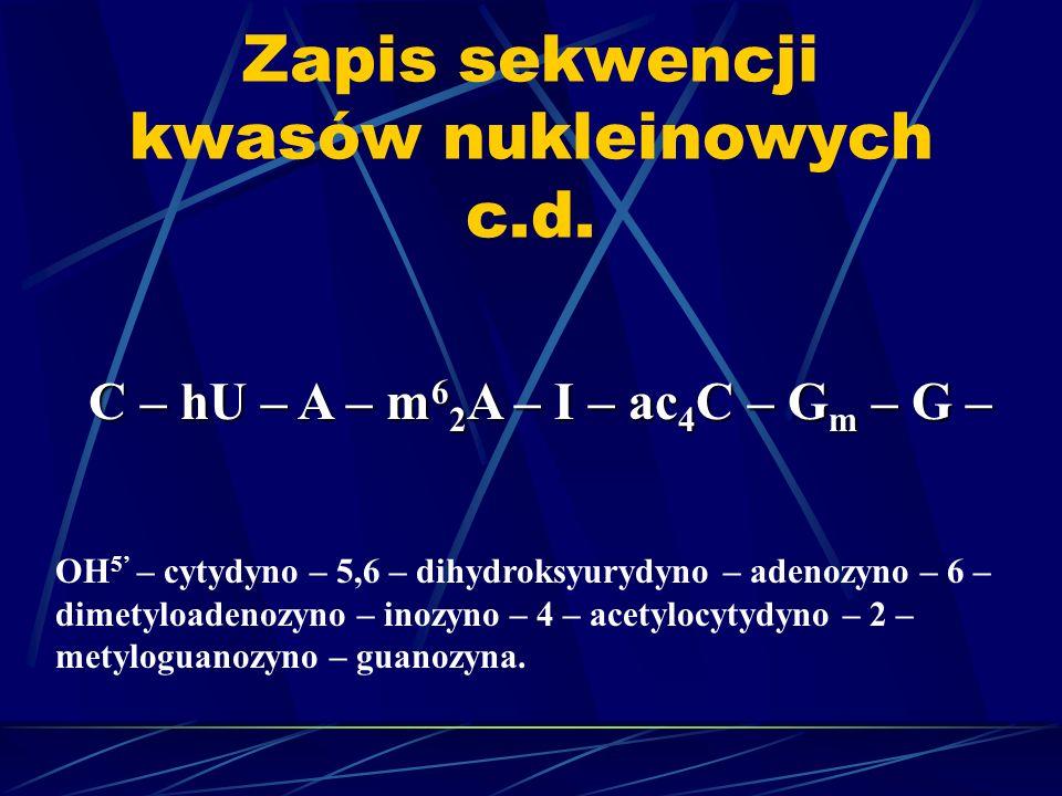 Zapis sekwencji kwasów nukleinowych c.d. C – hU – A – m 6 2 A – I – ac 4 C – G m – G – OH 5 – cytydyno – 5,6 – dihydroksyurydyno – adenozyno – 6 – dim