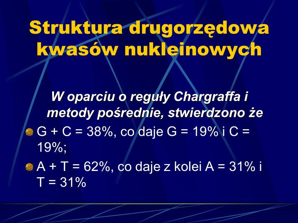 Struktura drugorzędowa kwasów nukleinowych W oparciu o reguły Chargraffa i metody pośrednie, stwierdzono że G + C = 38%, co daje G = 19% i C = 19%; A