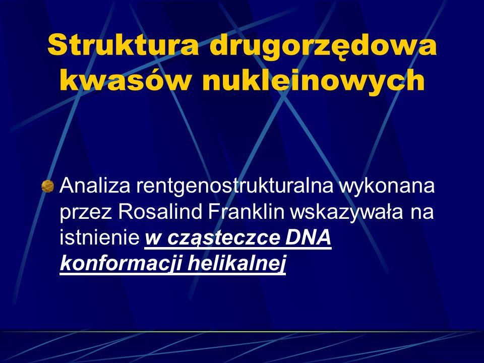 Struktura drugorzędowa kwasów nukleinowych Analiza rentgenostrukturalna wykonana przez Rosalind Franklin wskazywała na istnienie w cząsteczce DNA konf