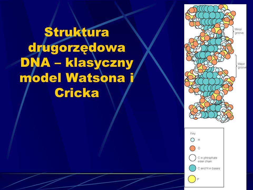 Struktura drugorzędowa DNA – klasyczny model Watsona i Cricka