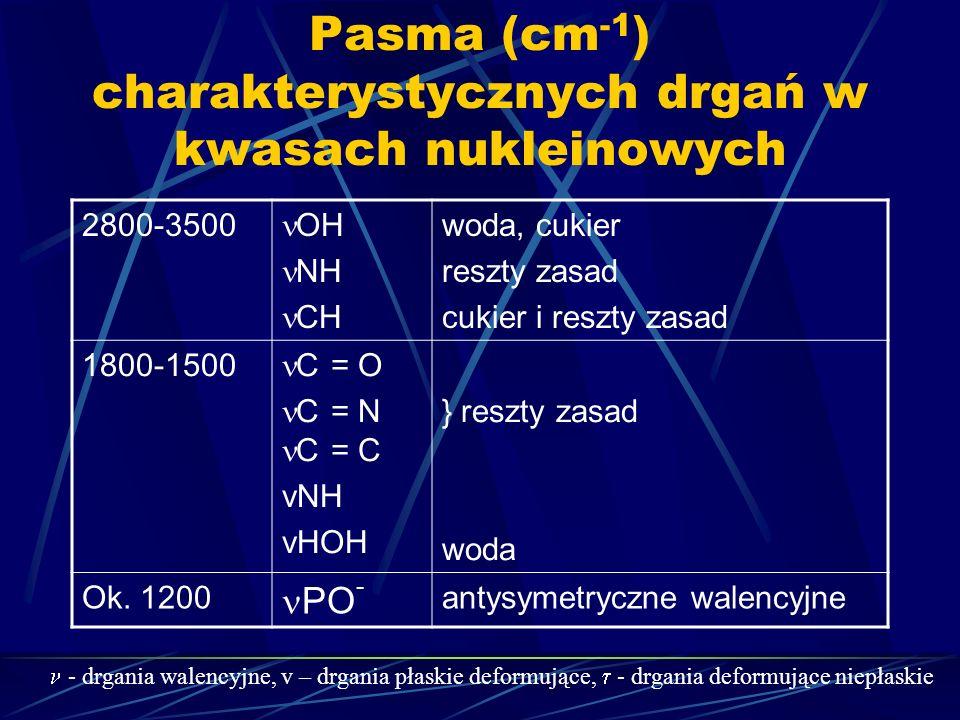 Pasma (cm -1 ) charakterystycznych drgań w kwasach nukleinowych 2800-3500 OH NH CH woda, cukier reszty zasad cukier i reszty zasad 1800-1500 C = O C =
