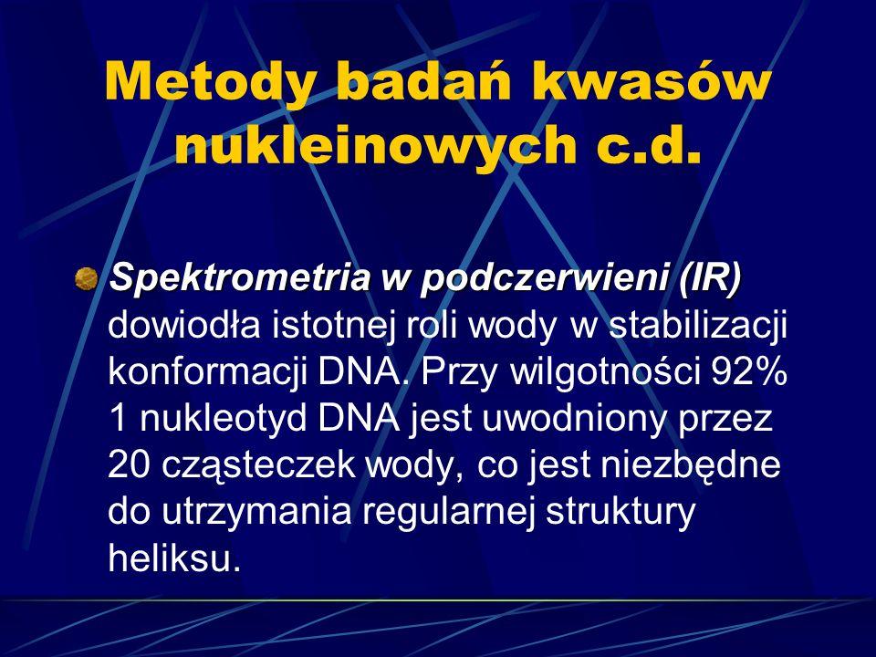Metody badań kwasów nukleinowych c.d. Spektrometria w podczerwieni (IR) Spektrometria w podczerwieni (IR) dowiodła istotnej roli wody w stabilizacji k