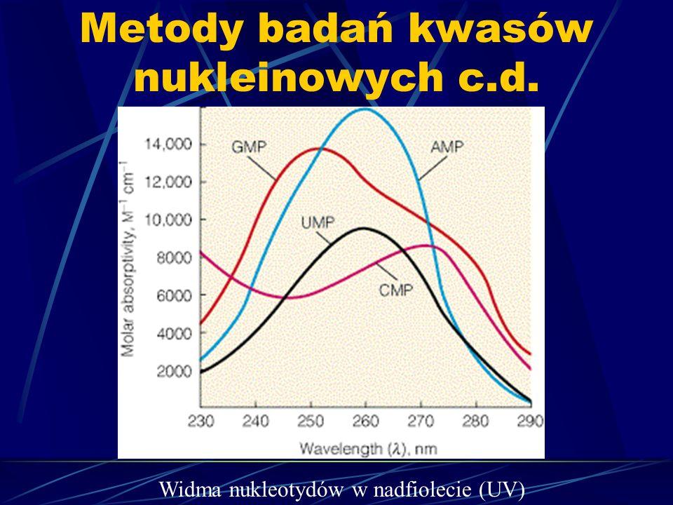 Metody badań kwasów nukleinowych c.d. Widma nukleotydów w nadfiolecie (UV)