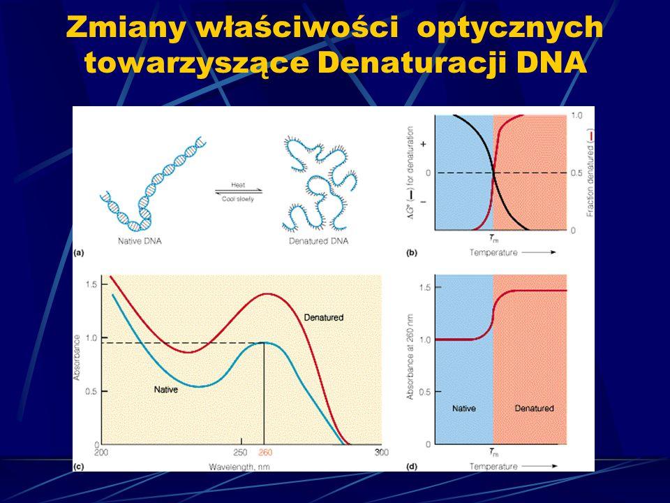 Zmiany właściwości optycznych towarzyszące Denaturacji DNA
