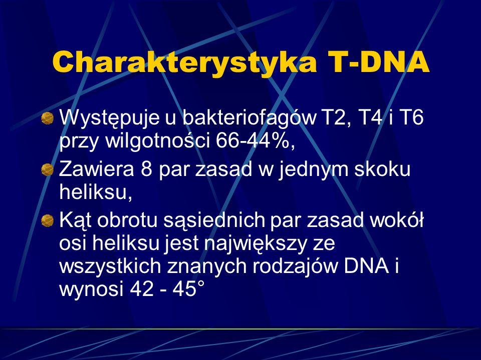 Charakterystyka T-DNA Występuje u bakteriofagów T2, T4 i T6 przy wilgotności 66-44%, Zawiera 8 par zasad w jednym skoku heliksu, Kąt obrotu sąsiednich