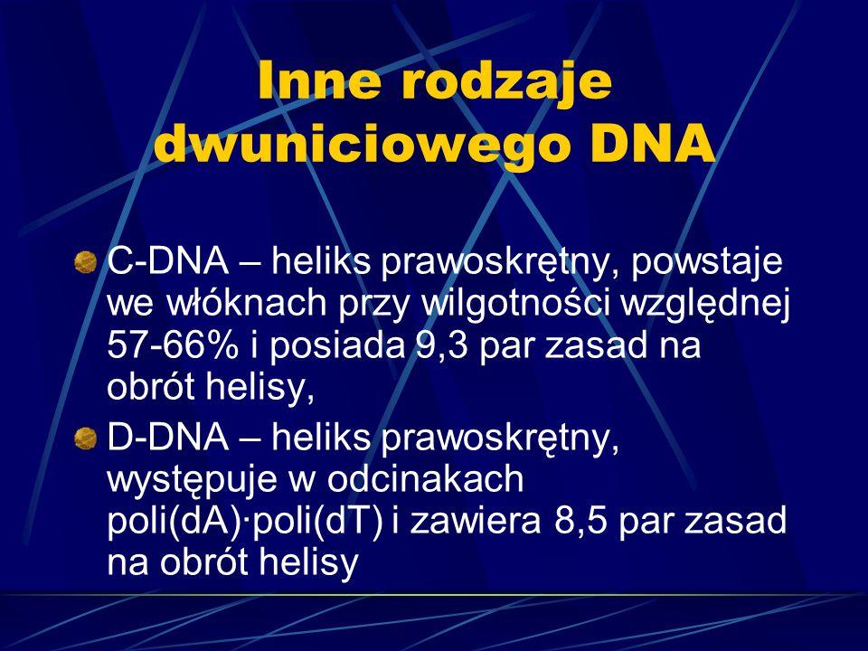 Inne rodzaje dwuniciowego DNA C-DNA – heliks prawoskrętny, powstaje we włóknach przy wilgotności względnej 57-66% i posiada 9,3 par zasad na obrót hel