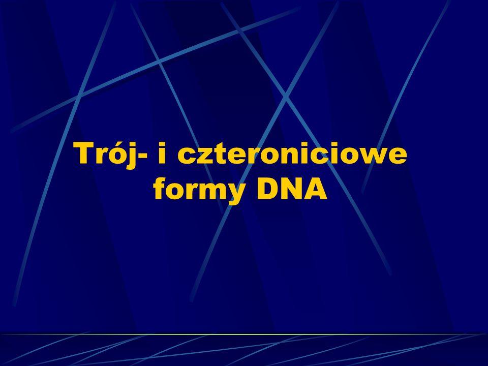 Trój- i czteroniciowe formy DNA