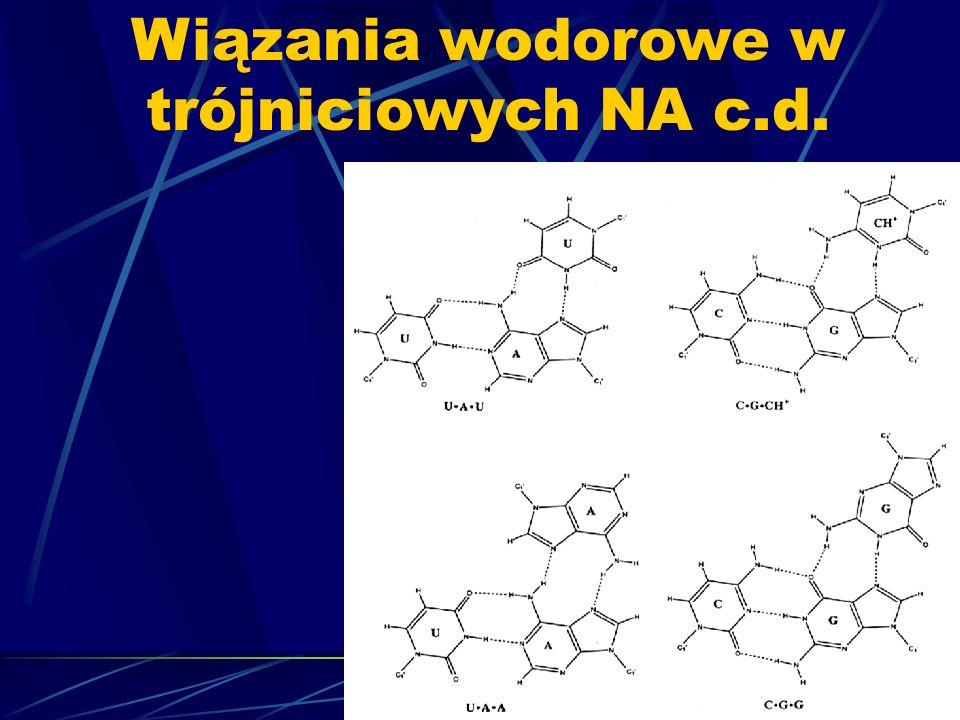 Wiązania wodorowe w trójniciowych NA c.d.